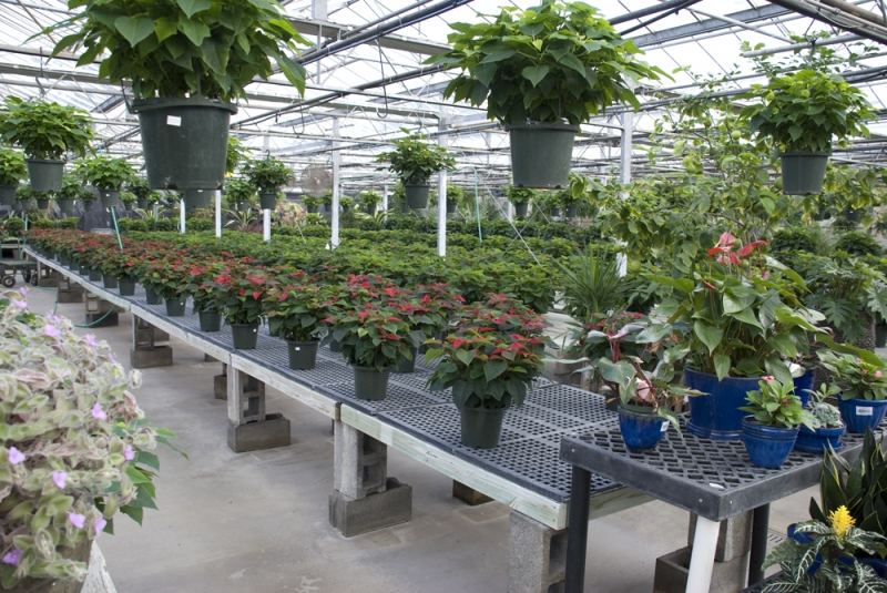 plants-3