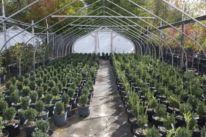 plants-per-boxwoods