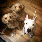 dog-THE GIRLS